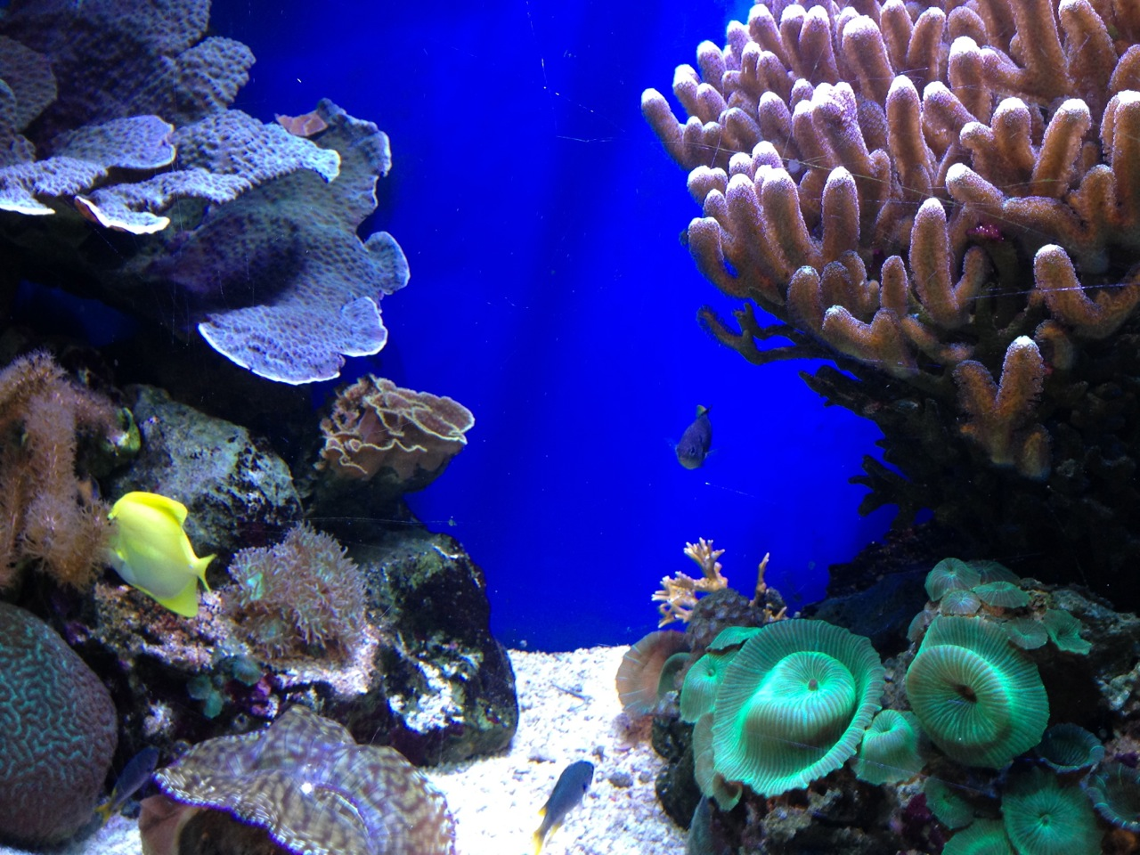 Family day out blue reef aquarium newquay hayley spurway for Discount aquarium fish and reef